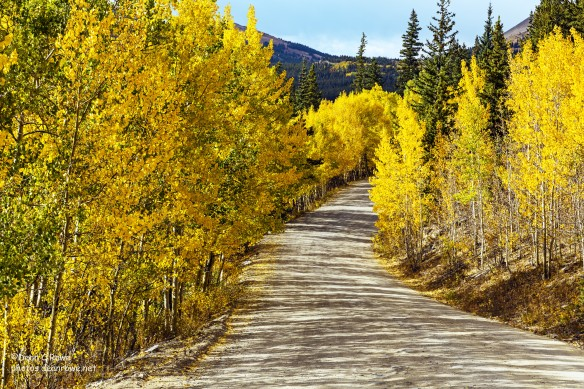 Fall Aspens Boreas Pass